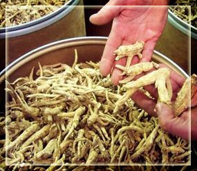 Coptic Frankincense - Maydi Frankincense - Boswellia frereana
