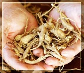 American Ginseng Root Grade A